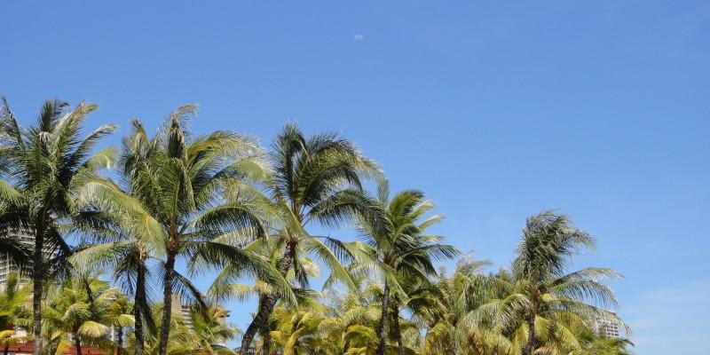 はじめてのハワイ旅 ハワイの空