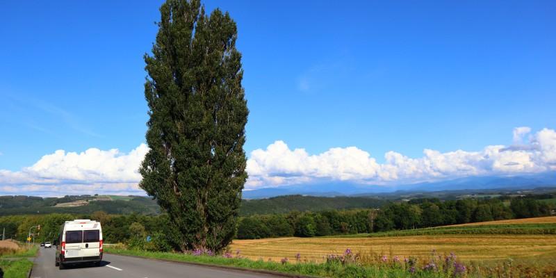 北海道東北旅2020 美瑛 ケンとメリーの木3